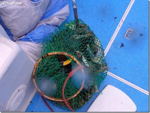 海底清掃-3
