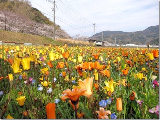 松崎風景-09