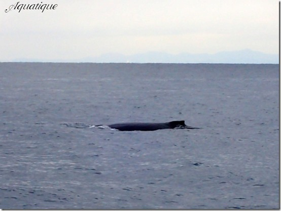 クジラ-1