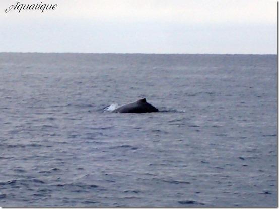 クジラ-2