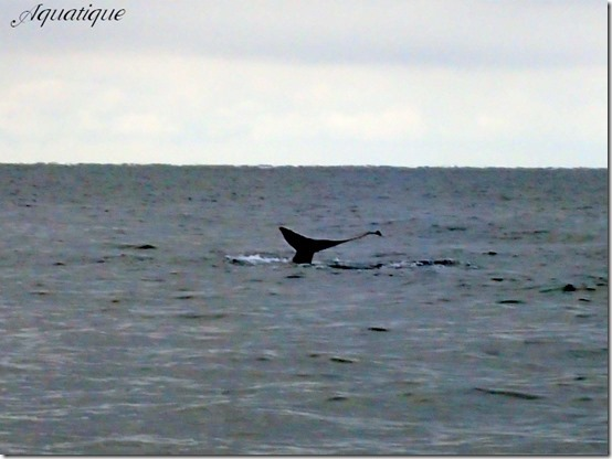 クジラ-3